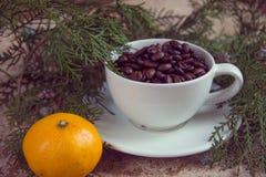 Σύνολο φλυτζανιών των φασολιών καφέ με τους κλάδους του χριστουγεννιάτικου δέντρου Στοκ εικόνα με δικαίωμα ελεύθερης χρήσης