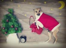 Σύνολο Χριστουγέννων, σκυλί Στοκ Φωτογραφίες