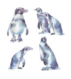 Σύνολο χρωματισμένης απεικόνισης watercolor penguins χέρι Στοκ φωτογραφίες με δικαίωμα ελεύθερης χρήσης