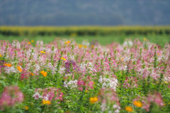 Σύνολο χρώματος λουλουδιών υποβάθρου Στοκ Φωτογραφίες
