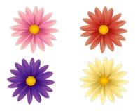 Σύνολο όμορφων ζωηρόχρωμων λουλουδιών Στοκ Εικόνες