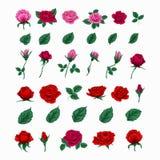 Σύνολο όμορφων τριαντάφυλλων Λουλούδια και φύλλα διανυσματική απεικόνιση