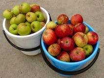 Σύνολο δύο κάδων των μήλων Στοκ εικόνα με δικαίωμα ελεύθερης χρήσης