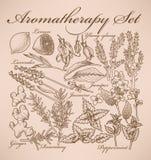 Σύνολο Aromatherapy Στοκ Εικόνες