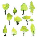 Σύνολο Eco πράσινων δέντρων watercolor Διανυσματική συλλογή δέντρων άνοιξη Στοκ Εικόνες
