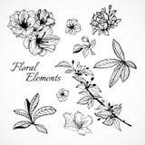Σύνολο floral στοιχείων Στοκ Εικόνα