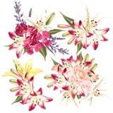 Σύνολο floral σχεδίων στο ύφος watercolor με τα λουλούδια Στοκ Φωτογραφία