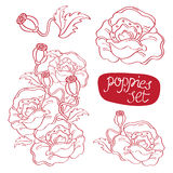 Σύνολο hand-drawn λουλουδιών και οφθαλμών παπαρουνών περιγράμματος Στοκ Εικόνα