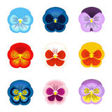 Σύνολο pansy διανύσματος λουλουδιών Στοκ Εικόνα