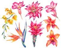 Σύνολο Watercolor εκλεκτής ποιότητας floral τροπικών φυσικών στοιχείων Στοκ εικόνες με δικαίωμα ελεύθερης χρήσης