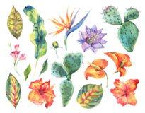 Σύνολο Watercolor εκλεκτής ποιότητας floral τροπικών φυσικών στοιχείων Στοκ Εικόνες