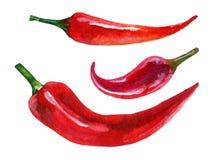 Σύνολο Watercolor κόκκινου πιπεριού τσίλι Στοκ Εικόνες