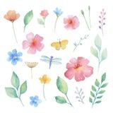 Σύνολο Watercolor λουλουδιών Στοκ εικόνες με δικαίωμα ελεύθερης χρήσης