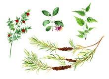 Σύνολο Watercolor πράσινων εγκαταστάσεων Στοκ Εικόνες
