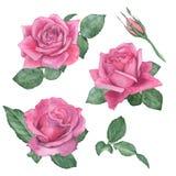 Σύνολο Watercolor τριαντάφυλλων χέρι σχεδίων νεολαίες γυναικών εσώρουχων πρωινού της οι επάνω θερμές Στοκ φωτογραφία με δικαίωμα ελεύθερης χρήσης