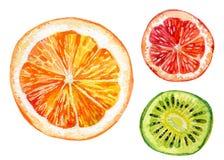 Σύνολο Watercolor φρέσκων πορτοκαλιού, ακτινίδιου και γκρέιπφρουτ Στοκ εικόνες με δικαίωμα ελεύθερης χρήσης