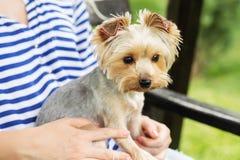 Σύνδεση των τσεκιών στο dog& x27 αυτιά του s Στοκ φωτογραφία με δικαίωμα ελεύθερης χρήσης