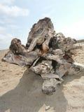 Σύνδεση Deadwood μια παραλία στοκ φωτογραφία