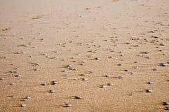 Σύσταση άμμου και κοχυλιών Στοκ Φωτογραφία