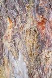 Σύσταση - ένας φλοιός ενός παλαιού δέντρου Στοκ εικόνες με δικαίωμα ελεύθερης χρήσης