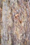 Σύσταση - ένας φλοιός ενός παλαιού δέντρου Στοκ Εικόνα