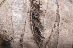 σύσταση δέντρων καρύδων στοκ εικόνα
