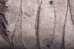 σύσταση δέντρων καρύδων Στοκ Φωτογραφία
