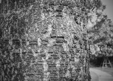 Σύσταση δέντρων σε γραπτό Στοκ Φωτογραφία