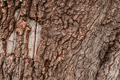 Σύσταση δέντρων φλοιών Στοκ εικόνες με δικαίωμα ελεύθερης χρήσης