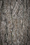 Σύσταση δέντρων φλοιών Στοκ εικόνα με δικαίωμα ελεύθερης χρήσης