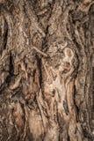 Σύσταση δέντρων φλοιών Στοκ φωτογραφία με δικαίωμα ελεύθερης χρήσης