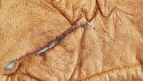 σύσταση δέρματος φακίδων ανασκόπησης Στοκ φωτογραφίες με δικαίωμα ελεύθερης χρήσης
