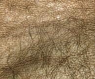 Σύσταση δέρματος, χρυσό χρώμα φορεμάτων δέρματος, το λαμπρό textur δερμάτων Στοκ Εικόνα