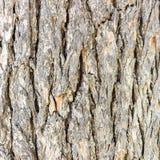Σύσταση ή υπόβαθρο του φλοιού δέντρων Στοκ εικόνα με δικαίωμα ελεύθερης χρήσης
