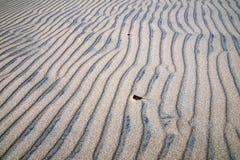 Σύσταση αμμόλοφων, nationaal πάρκο Slowinski στοκ φωτογραφία με δικαίωμα ελεύθερης χρήσης