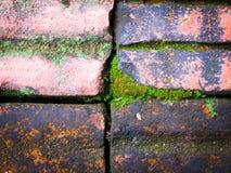 Σύσταση ανασκόπησης τοίχων Στοκ Φωτογραφίες