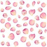 Σύσταση από τα πέταλα των τριαντάφυλλων στο απομονωμένο υπόβαθρο Στοκ Εικόνα