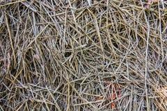 Σύσταση αχύρου ρυζιού Στοκ Φωτογραφίες