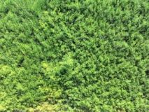 Σύσταση βελόνων πεύκων στο φράκτη εγκαταστάσεων θερινών κήπων στοκ φωτογραφίες