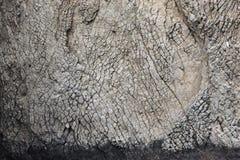 Σύσταση βράχου Η σύσταση του βράχου βράχου που βρίσκεται στη φυσική επιφύλαξη Kara-Dag Βράχοι του Karadag Στοκ Εικόνες