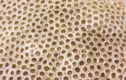 σύσταση βράχου κοραλλιώ&nu Στοκ φωτογραφίες με δικαίωμα ελεύθερης χρήσης