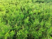 Σύσταση βρύου χλόης βελόνων πεύκων στο θερινό κήπο στοκ φωτογραφία