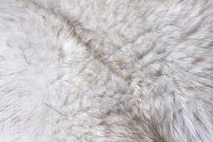 σύσταση γουνών Στοκ φωτογραφίες με δικαίωμα ελεύθερης χρήσης