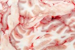 Σύσταση εγκεφάλου στοκ φωτογραφία