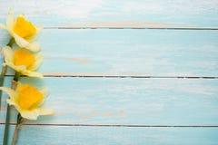 Σύσταση ενός δέντρου με τα κίτρινα λουλούδια Τοπ άποψη, με το κενό διάστημα για την επιγραφή ή τη διαφήμιση στοκ εικόνες με δικαίωμα ελεύθερης χρήσης