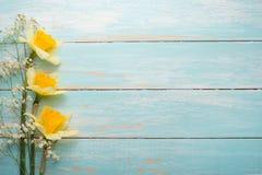 Σύσταση ενός δέντρου με τα κίτρινα λουλούδια Τοπ άποψη, με το κενό διάστημα για την επιγραφή ή τη διαφήμιση στοκ εικόνα με δικαίωμα ελεύθερης χρήσης
