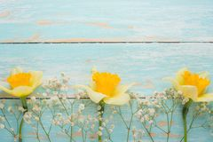Σύσταση ενός δέντρου με τα κίτρινα λουλούδια Τοπ άποψη, με το κενό διάστημα για την επιγραφή ή τη διαφήμιση στοκ φωτογραφία με δικαίωμα ελεύθερης χρήσης
