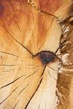 Σύσταση ενός κομματιού του ξύλου. στοκ φωτογραφία