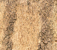 Σύσταση ενός ξύλου από το δέντρο Στοκ Εικόνα