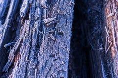 Σύσταση ενός παλαιού δέντρου Παλαιά ανασκόπηση δέντρων ραγισμένο παλαιό δέντρο Hoarfrost σε ένα παλαιό ραγισμένο δέντρο Στοκ Φωτογραφίες
